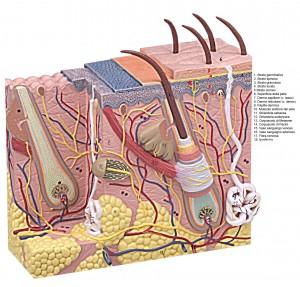 Dermatologa in provincia di Pavia